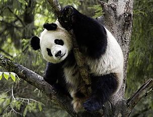 © WWF-CANON / Bernard De Wetter
