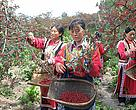 WWF volunteers help promoting the sustainably grown and harvested  Sichuan Peppers in Carrefour.