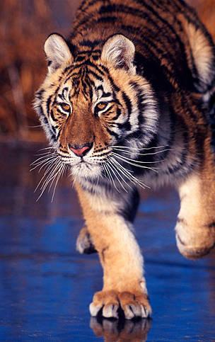 © Klein Hubert/WWF